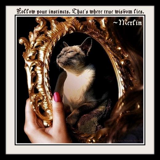 Merlin-wisdom-cat
