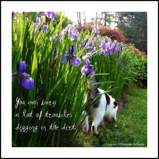 Odin-cat-garden-quote-digging-iris