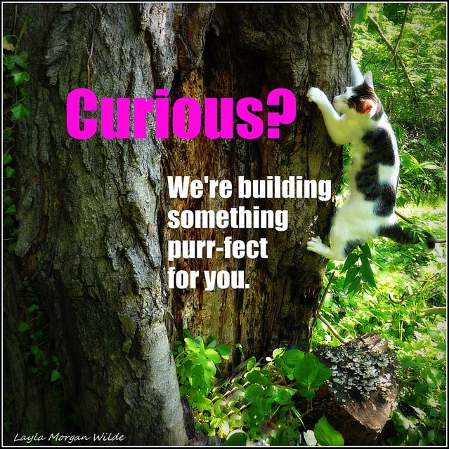curious-cat-wisdom-101-tree-quote