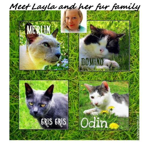 cats-catwisdom101-layla-morgan-wilde-1 Welcome to Cat Wisdom 101