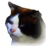domino Domino's Profile