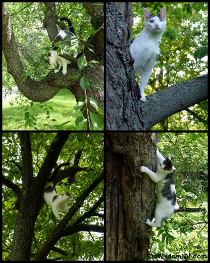 Cat-tree-odin-collage
