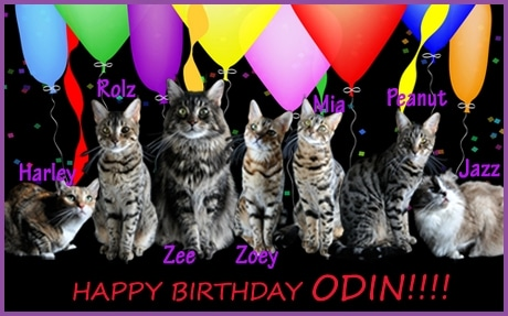 Birthday-card-cats-cat wisdom 101