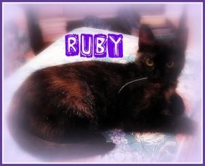 Cat-conscious-ruby-cat wisdom 101-tortie