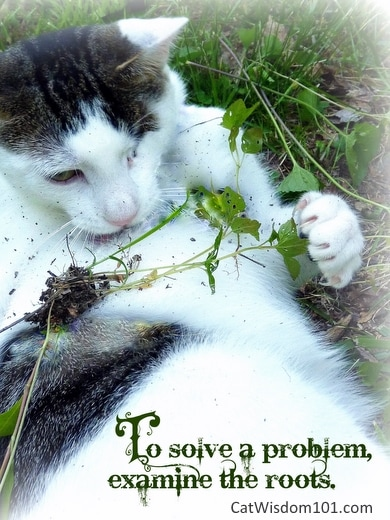Cat-cute-quote-problem-roots-odin