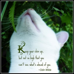 Cat-quote-chin-up-humor-odin