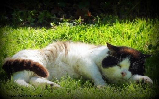 Cat wisdom 101-feral-cat-domino