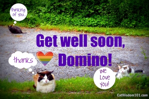 Cat wisdom 101-get well-card-cats