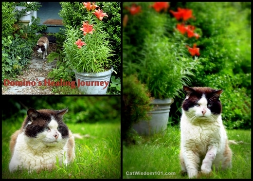 Cat-wisdom- healing-journey-feral-domino