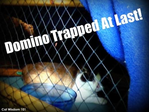 Cat-wisdom101-domino-trapping-feral-cat FIV+ Former Feral Domino's 15th Birthday