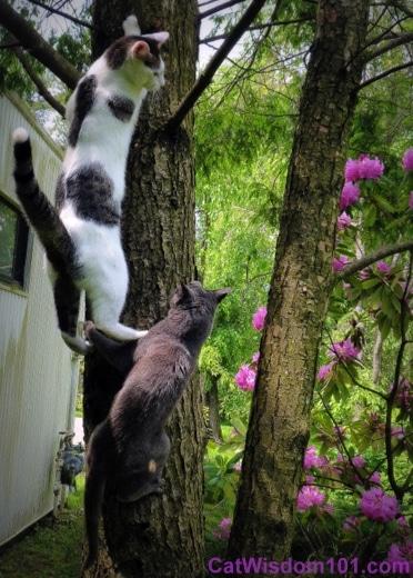 Cats-climbing-trees-humor