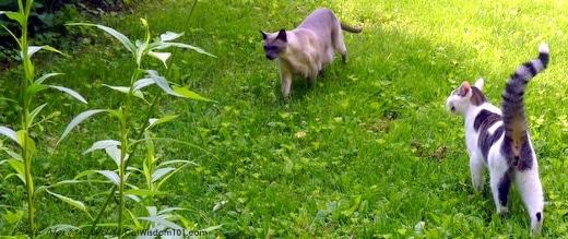 Cats-outdoors-garden-catwisdom101