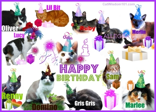 Cats-wisdom 101-birthday-collage