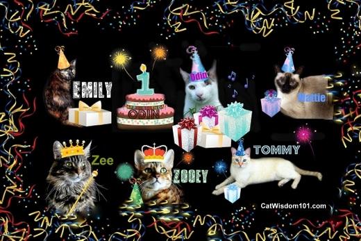 Cats-wisdom 101-birthday-odin