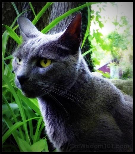 Gris Gris-cat-portrait-catwisdom101