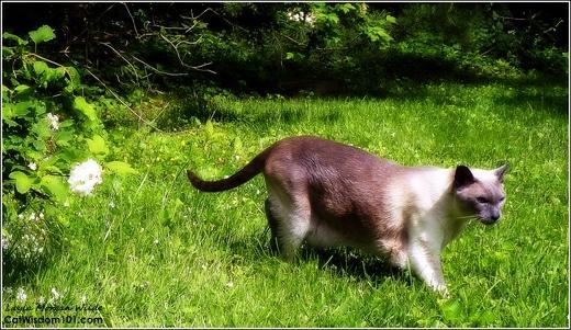 Merlin-cat-garden-catwisdom101-grass