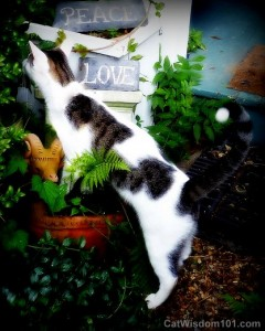 Cat-peace-love-garden-