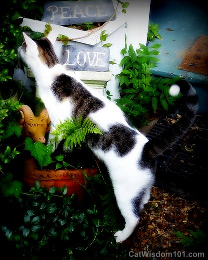 Cat-peace-love-garden-