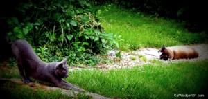 Cat-scratching-tree-yoga