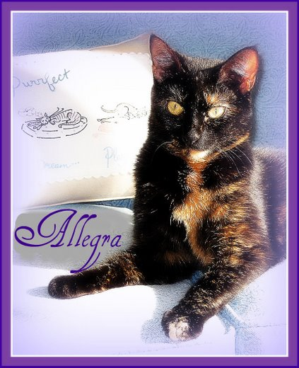 Conscious Cat Allegra