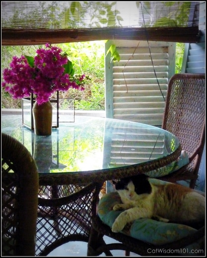 cat-domino-feral-porch-catwisdom101