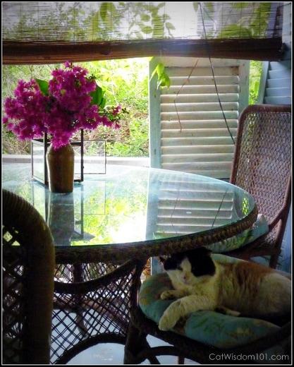 cat-domino-feral-porch-catwisdom101 FIV+ Former Feral Domino's 15th Birthday