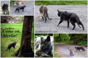 cat-herding-humor-merlin-gris gris