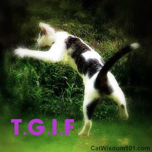 cat-jumping-humor-quote-tgif-odin