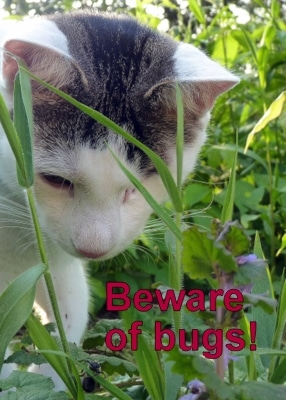 cat-odin-beware-bugs-bees