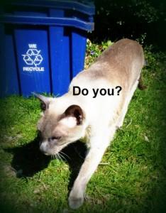 feline earth day