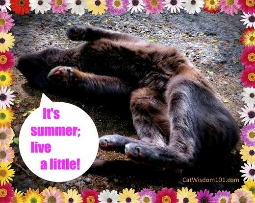 cat-summer-wisdom-humor