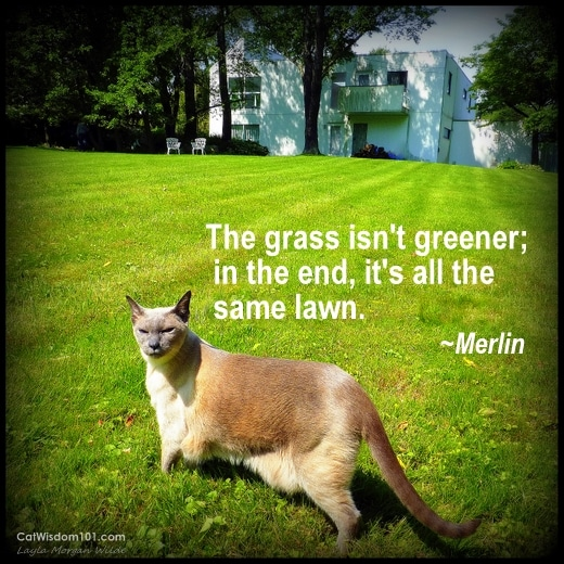 cat wisdom 101-merlin-siamese-grass-greener-quote