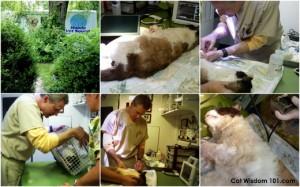 cat wisdom 101-mobile vet squad-feral cat