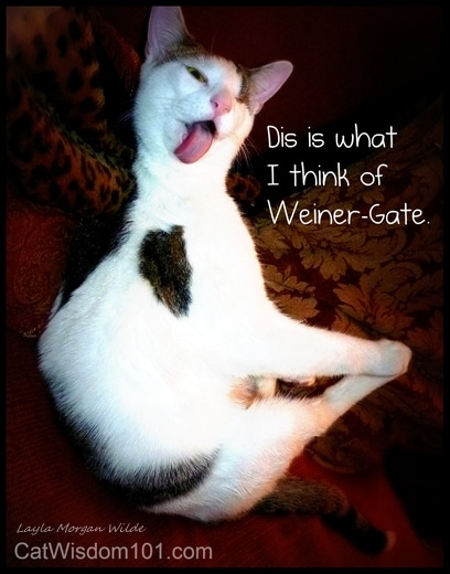 cat wisdom 101-weiner gate-humor-cat-odin