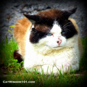 cat wisdom-feral-cat-survivor