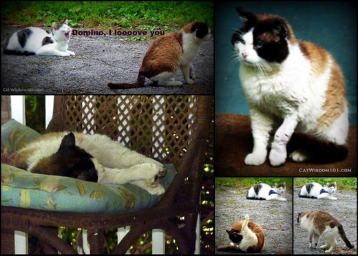 cat-wisdom-healing-journey-feral.