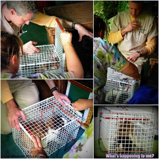 feral-catwisdom101-transfer cage-
