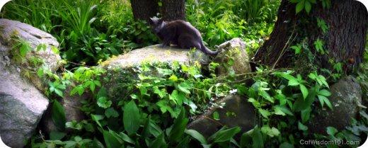 gris gris-cats-garden-catwisdom101