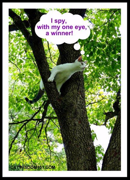 I spy with my eye-cat-tree-winner-Odin