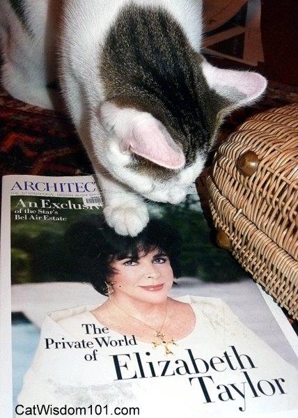 Liz-Taylor-cat-odin-humor-architectural digest