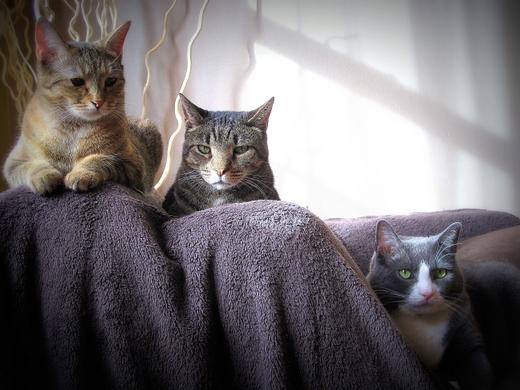 i-have-cat-petie-haddie-kip-cat-wisdom-101
