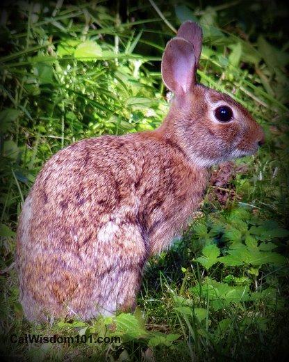 baby-rabbit-bunny-cat-hunting