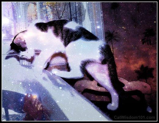 cat-fantasy-art-hunting-feet-bath-odin