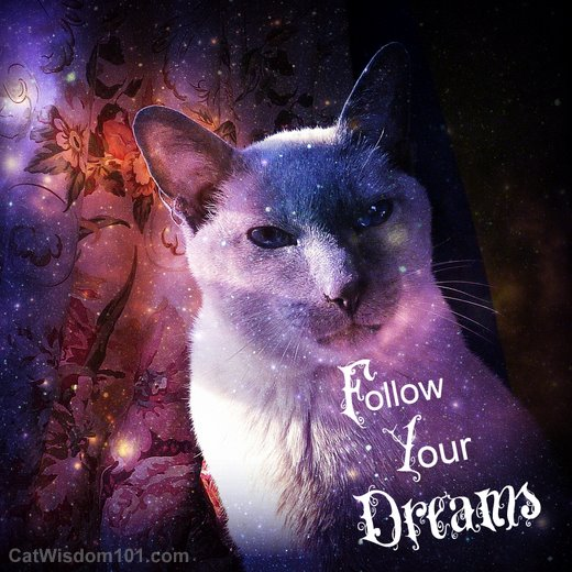 cat-merlin-follow-your-dreams-quote