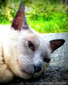 cat-nap-merlin