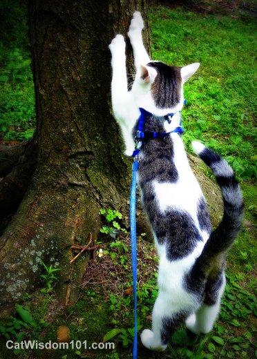 cat-scratching-tree-post