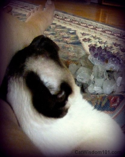 cat-siamese-crystals-healing-ling ling