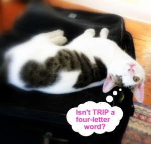 cat-travel-luggage-humor-odin-suitcase