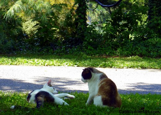 cats-playing-garden-outdoors-domino-odin