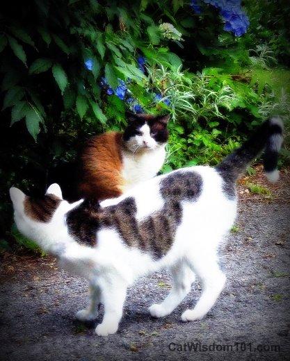 cats-playing-odin-domino-garden-hydrangeas